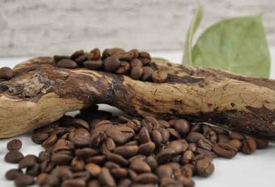 Kaffee-wissen